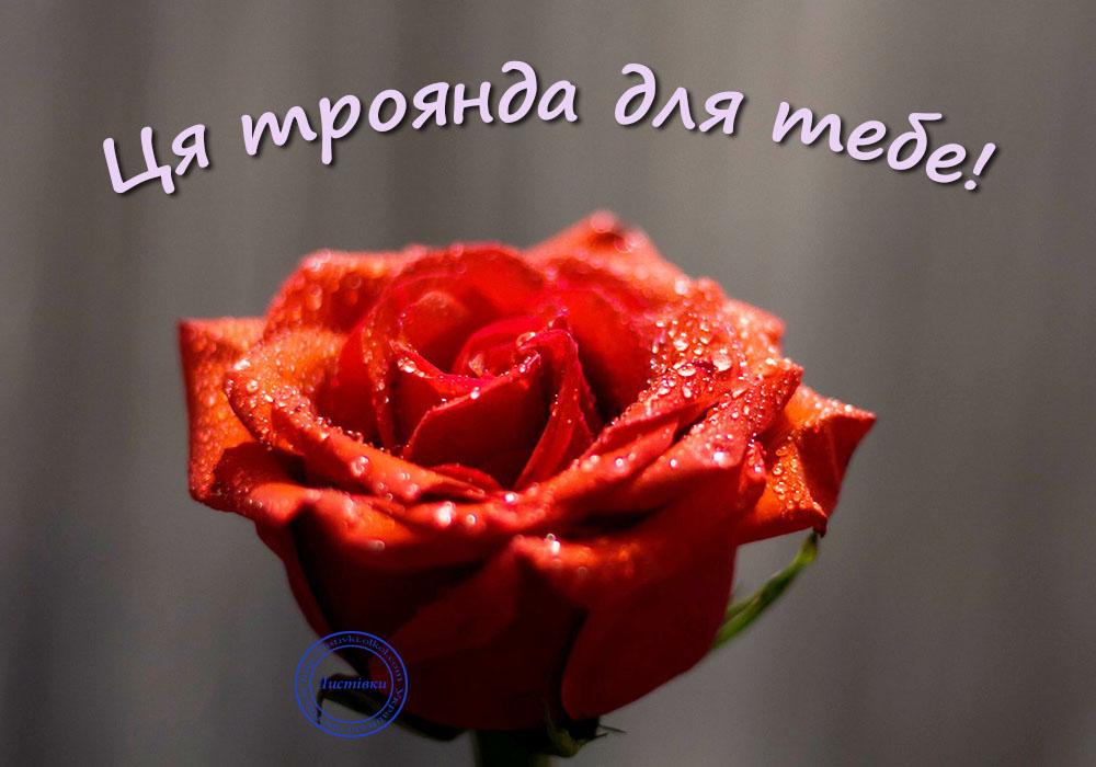 Листівка для жінки з трояндою